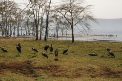 Lac Manyara